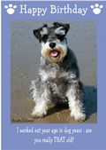 "Miniature Schnauzer-Happy Birthday - ""Are You Really THAT Old"" Theme"
